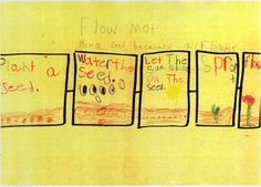 Flow Map - How a Seed Becomes a Flower