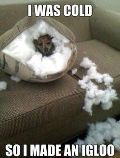 Hahah, this makes me think of my dog, but thankfully he doesn't rip things apart he just burrows into the couch. Haha  http://epicke.cz/stranka/40