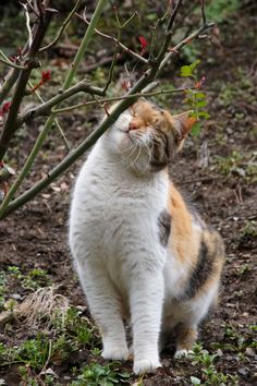 """* * """" I rub meez cheek against dis branch to mark it - so other cats knowz not to take a chance and invade territory."""""""