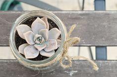 SUCCULENTS IN A JAR DIY