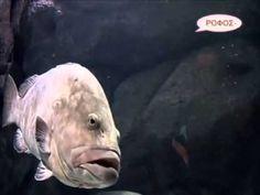 Ο Κόσμος των Ζώων - Τα Ψάρια Fish, Pets, Youtube, Animals, Animales, Animaux, Pisces, Animal, Animais