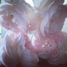 Roses. Sunday morning .