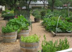 Edible garden in pots and boxes. Pretty, practical, and can be adapted to small spaces.