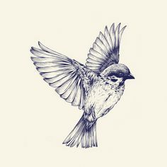 vintage bird illustration flying - Google Search