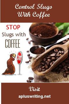Control slugs and snails naturally with coffee. A slug repellent is better than looking for a good homemade slug bait.  Have a slug proof garden with coffee.  Repel slugs from the veggie garden with coffee.  Coffee will repel slugs from any garden bed be it flower, trees, shrubs or vegetables. Slugs In Garden, Snails In Garden, Garden Pests, Fruit Garden, Herbs Garden, Garden Tips, Garden Projects, Garden Ideas, Slug Control