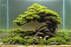 Aquarium Landscape, Nature Aquarium, Planted Aquarium, Aquarium Fish, Bonsai Art, Bonsai Plants, Fish Tank Terrarium, Cool Fish Tanks, Amazing Aquariums