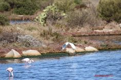 Immobilien auf Sardinien: Stagno di Olbia ...auf dem Weg mach Olbia / ...131... Animals, Sardinia, Real Estates, Animales, Animaux, Animal, Animais