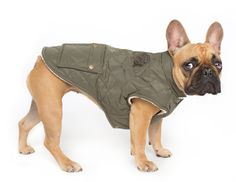 The Cityscape Coat! Give your fashion forward pooch the best protection for those dreary winter months.