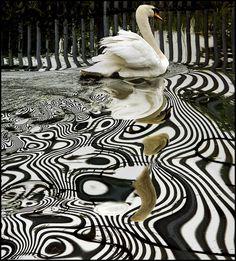 Swan Lake - PSYCHEDELIC NATURE by adrians_art, via Flickr  #PSM #HalfPintPro www.prospersocial.com www.halfpintpro.com