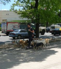 Il n'est pas rare de croiser ces promeneurs de #chiens dans la capitale #Argentine