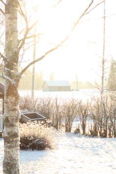 Happy days: Frozen fields