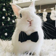 Dapper bunny