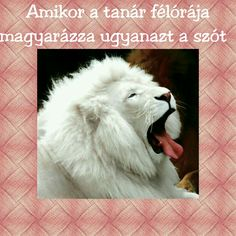 Lion, Animals, Animales, Animaux, Leo, Lions, Animal, Animais