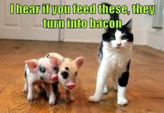 I hear if you feed these, they turn into bacon http://cheezburger.com/9105709568