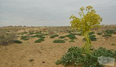 Usbekistan * Der Duft der Seidenstraße * - Wüste in Usbekistan Places To See, Vineyard, Plants, Outdoor, Photos, Travel Advice, Places, Traveling, Outdoors