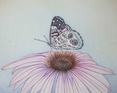 Pencil Art Work Butterfly Atop Pink Cone Flower by pencilartwork