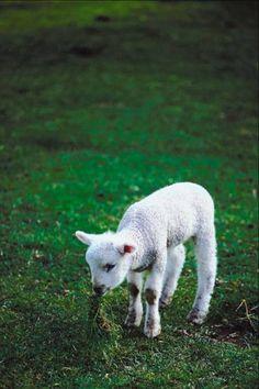 1423965e47cd 51 Best Animals images