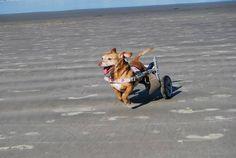 Em alta velocidade!