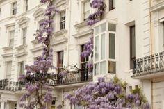 Wisteria grows on a building in London, England (via Exterior Envy /(imagem JPEG, pixels)) London Townhouse, Beautiful Buildings, Beautiful Homes, Beautiful Places, Beautiful Dream, Dead Gorgeous, Beautiful Flowers, Parisian Apartment, Paris Apartments