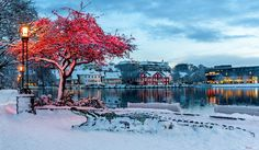 Stavanger Norway is so beautiful 😍 Stavanger Norway, Video Installation, Its A Wonderful Life, Art Of Living, Color Street, Finland, Backdrops, Around The Worlds, Old Things