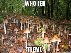 When you feed teemo