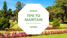 Everybody loves their own landscape. A well-organized landscape enhances the beauty of the property. However, it needs to be maintained and decorated properly. It requires a number of things that you should consider. In this blog, we are going to share with you 3 major landscape maintaining tips. Let's take a closer look at these tips. Landscape Maintenance, Garden Maintenance, Landscape Solutions, Professional Landscaping, Landscape Services, Grass Seed, Peace Of Mind, Beautiful Landscapes, Shrubs