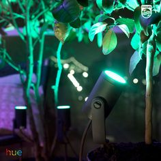 Experience the impact of color in your garden with the Philips Hue Lily spot light. Visit our website for more info and inspiration. Smart Lighting System, Outdoor Garden Lighting, Colorful Garden, Lighting Ideas, Spotlight, Hue, New Homes, Lily, Lights