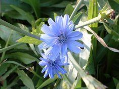 ΒΟΤΑΝΟΘΕΡΑΠΕΙΑ . ΘΕΡΑΠΕΥΤΙΚΑ ΦΥΤΑ ΚΑΙ ΒΟΤΑΝΑ: ΦΑΓΩΣΙΜΑ ΘΕΡΑΠΕΥΤΙΚΑ ΑΓΡΙΟΧΟΡΤΑ Blog Page, Plants, Plant, Planets