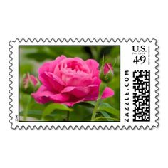 Shop Old Garden Roses Postage Stamp created by melcdreyer. Refurbished Pc, Garden Roses, Postage Stamps, Coupon Codes, Best Gifts, Usa, Store, Link, Board