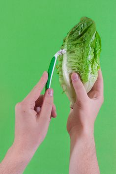 art direction | lettuce + razor monochromatic green still life photography