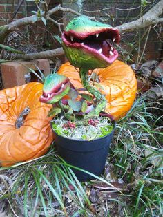 """Plant Series – """"UnEarthed"""" Plant #2. Hand made carnivorous man eating plant prop. Venus fly trap. Monster plant. For sale!!"""