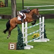 DREAM....what I wouldn't give to do an authentic cross country course with a horse that could actually make it through lol
