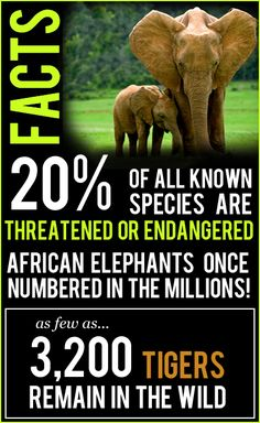Wildlife conservation facts - 20% of all known species are threatened or endangered.  Let's protect our elephants and tigers!