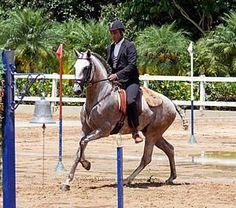 Generations of Interagro Talent Showcased at Brazilian Working Equitation Championships