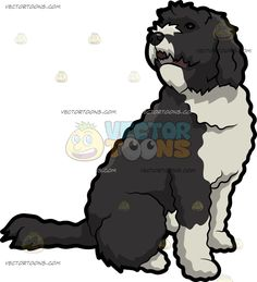 A Curious Portuguese Water Dog :  A dog with curly black and white coat and droopy ears sits on the floor while turning its head right to slightly face its back in curiosity  The post A Curious Portuguese Water Dog appeared first on VectorToons.com.   #clipart #vector #cartoon
