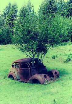 Fort Bragg, United States - Picture by wakitu. Tom was stationed at Fort Bragg Abandoned Houses, Abandoned Places, Abandoned Vehicles, Derelict Places, Foto Picture, Rust In Peace, Rusty Cars, Fort Bragg, Growing Tree