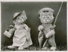http://www.froelichundkaufmann.de/out/pictures/master/product/5/Katzen-Die-wundersame-Welt-des-Harry-Whittier-Frees_669180_4.jpg
