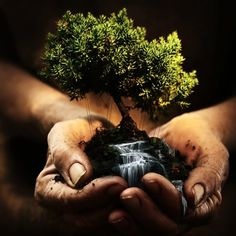 Reminds me how much i love bonsai trees! I will own a chinese bonsai tree in this lifetime! Mother Earth, Mother Nature, Leonardo Boff, No Photoshop, Photoshop Projects, Photoshop Images, We Are The World, Do Your Best, Favim