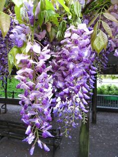 Wisteria hung on the patio by moms kitchen