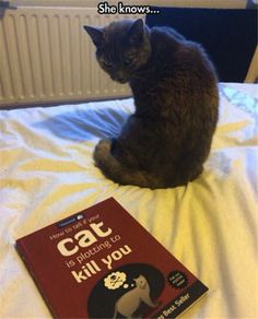 How To Tell If Your Cat Is Plotting To Kill You...  She knows...