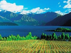Fantastic vineyards. Click to read and see more.: