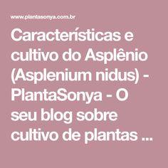 Características e cultivo do Asplênio (Asplenium nidus) - PlantaSonya - O seu blog sobre cultivo de plantas e flores