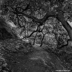 12/ 26/2914 - One of my favorite places for trail running is through the Garland Ranch Regional Park in Carmel Valley. I made this photo while running along the Buckeye Trail.