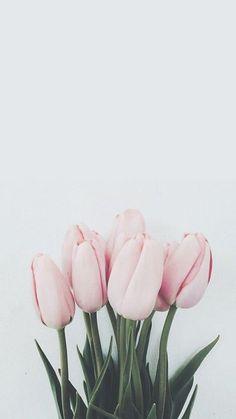 Wallpaper flowers tulips ideas Tapete Blumen Tulpen Ideen The post Wallpaper Blumen Tulpen Ideen appeared first on Ruby Sanders.