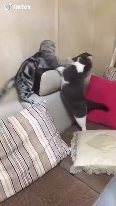 each others cats fighting, funny animal videos, funny animal pictures Funny Animal Videos, Cute Funny Animals, Funny Animal Pictures, Cute Baby Animals, Animals And Pets, Cute Cats, Funny Cats, Videos Funny, Wild Animals