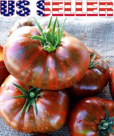 50 Organically Grown Chocolate Stripes Tomato Seeds Heirloom Non GMO RARE USA | eBay