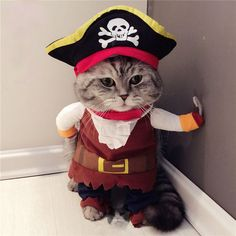 Captain Pirate Cat Clothes Coat with Skull Hat Pet Dog Puppy Kitty Cosplay Fun | eBay