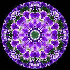 Alan Klemp Photography - Flower Mandala designs - Mandalas made with flowers