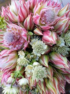 "pink ""blushing bride"" protea and astrantias bouquet… Big Flowers, Exotic Flowers, Tropical Flowers, Amazing Flowers, Colorful Flowers, Beautiful Flowers, Fall Wedding Bouquets, Bridesmaid Flowers, Wedding Flowers"