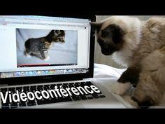 La vidéo conférence - YouTube